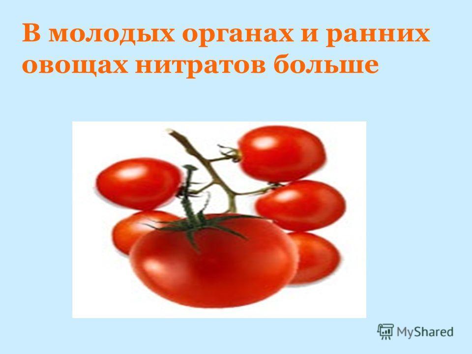 В молодых органах и ранних овощах нитратов больше
