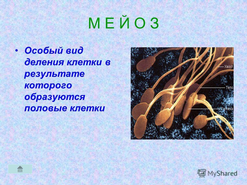 М Е Й О З Особый вид деления клетки в результате которого образуются половые клетки