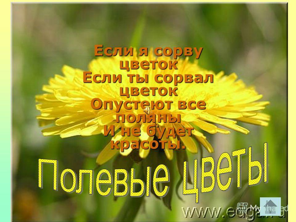 Если я сорву цветок Если ты сорвал цветок Опустеют все поляны И не будет красоты.
