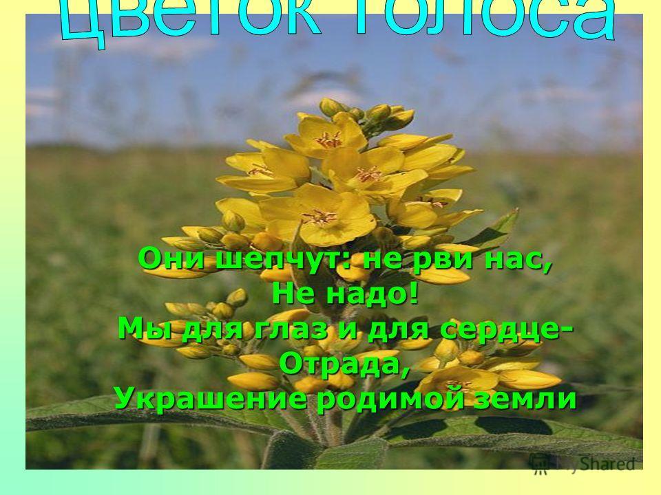 Они шепчут: не рви нас, Не надо! Мы для глаз и для сердце- Отрада, Украшение родимой земли