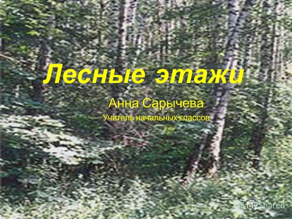 Лесные этажи Анна Сарычева Учитель начальных классов
