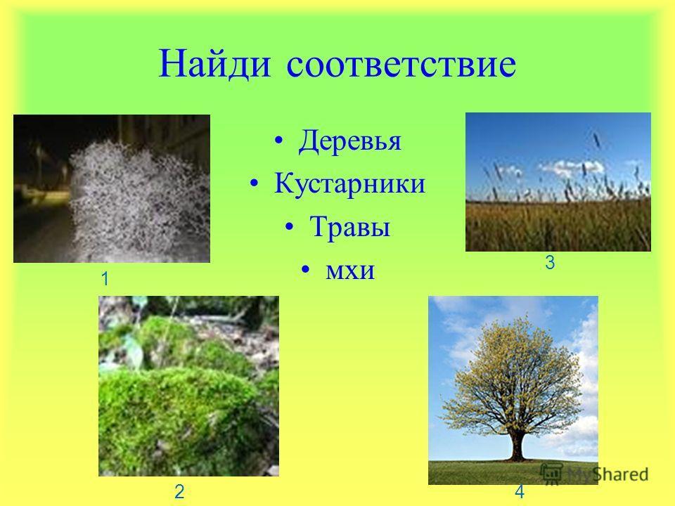 Найди соответствие Деревья Кустарники Травы мхи 1 2 3 4