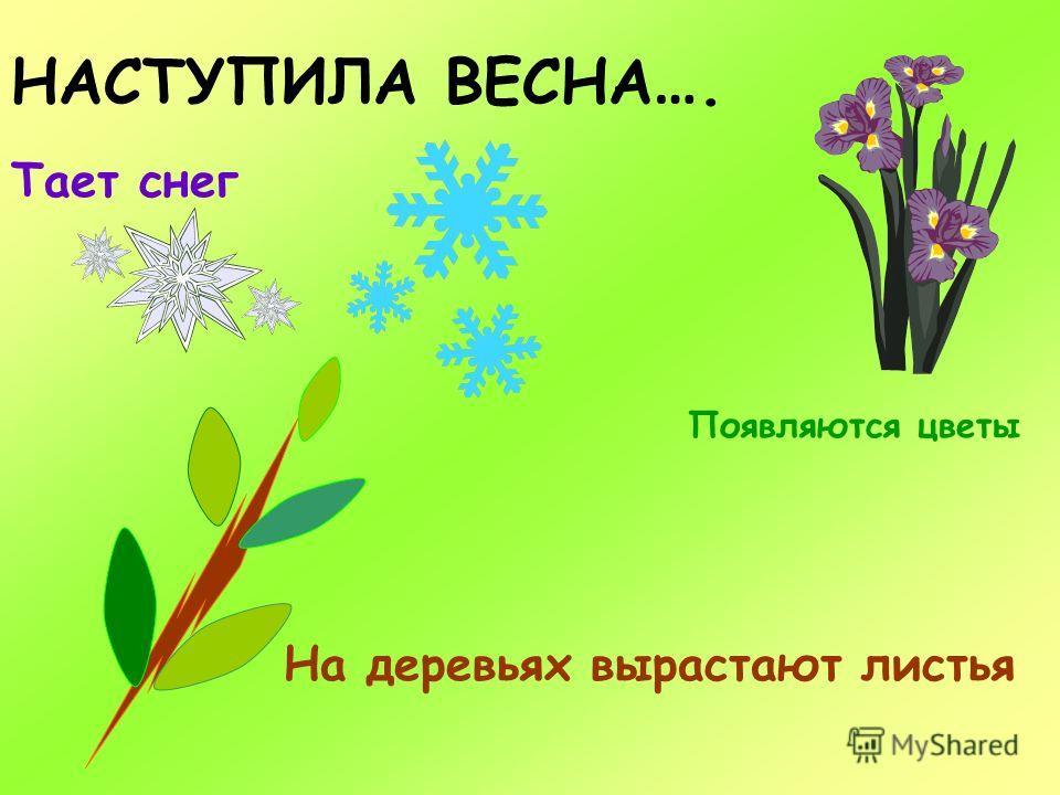 НАСТУПИЛА ВЕСНА …. Тает снег Появляются цветы На деревьях вырастают листья