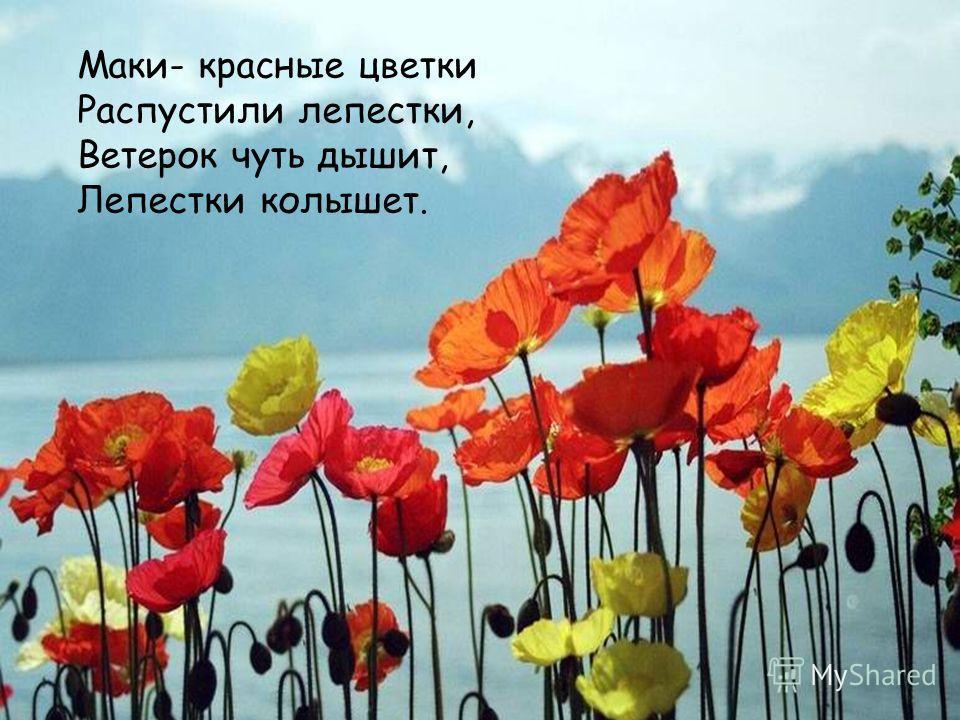 Маки- красные цветки Распустили лепестки, Ветерок чуть дышит, Лепестки колышет.