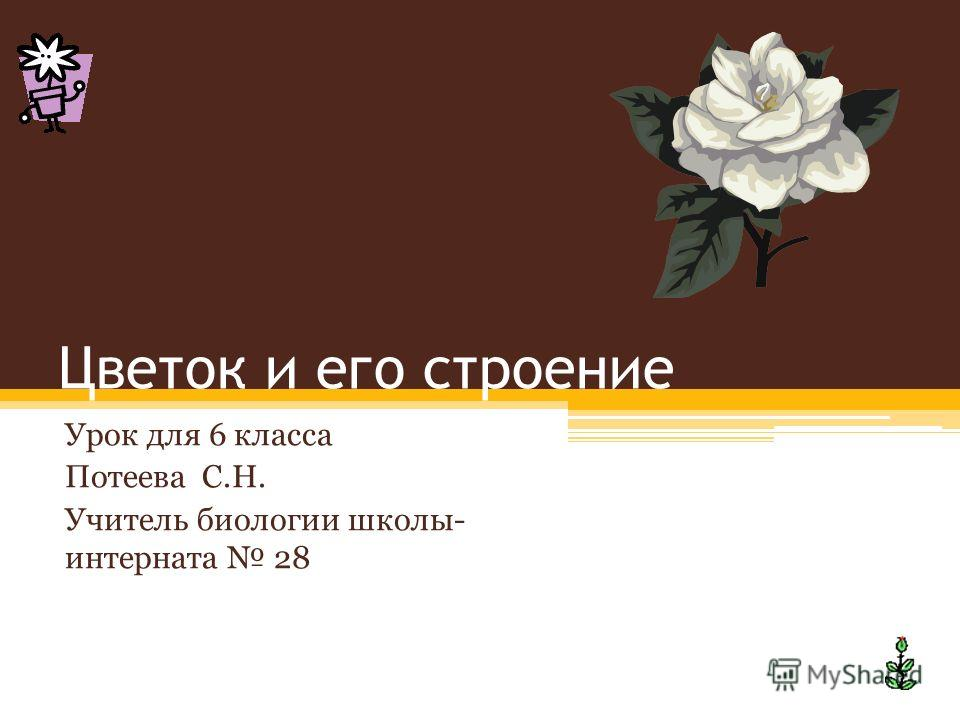 Цветок и его строение Урок для 6 класса Потеева С.Н. Учитель биологии школы- интерната 28