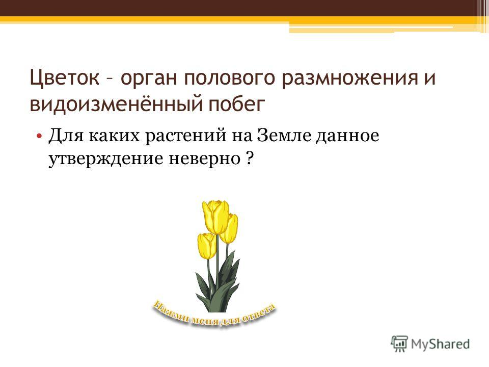 Цветок – орган полового размножения и видоизменённый побег Для каких растений на Земле данное утверждение неверно ?