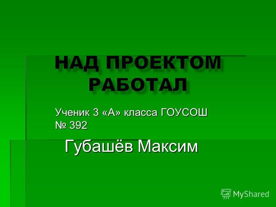 Ученик 3 «А» класса ГОУСОШ 392 Губашёв Максим Губашёв Максим