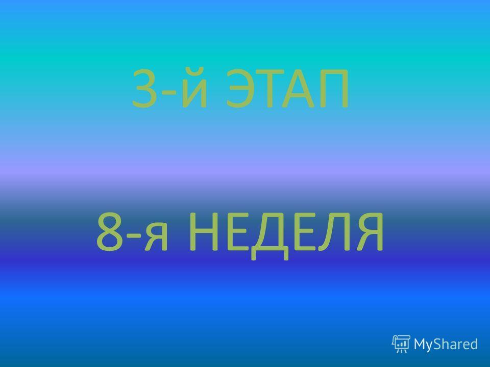 3-й ЭТАП 8-я НЕДЕЛЯ
