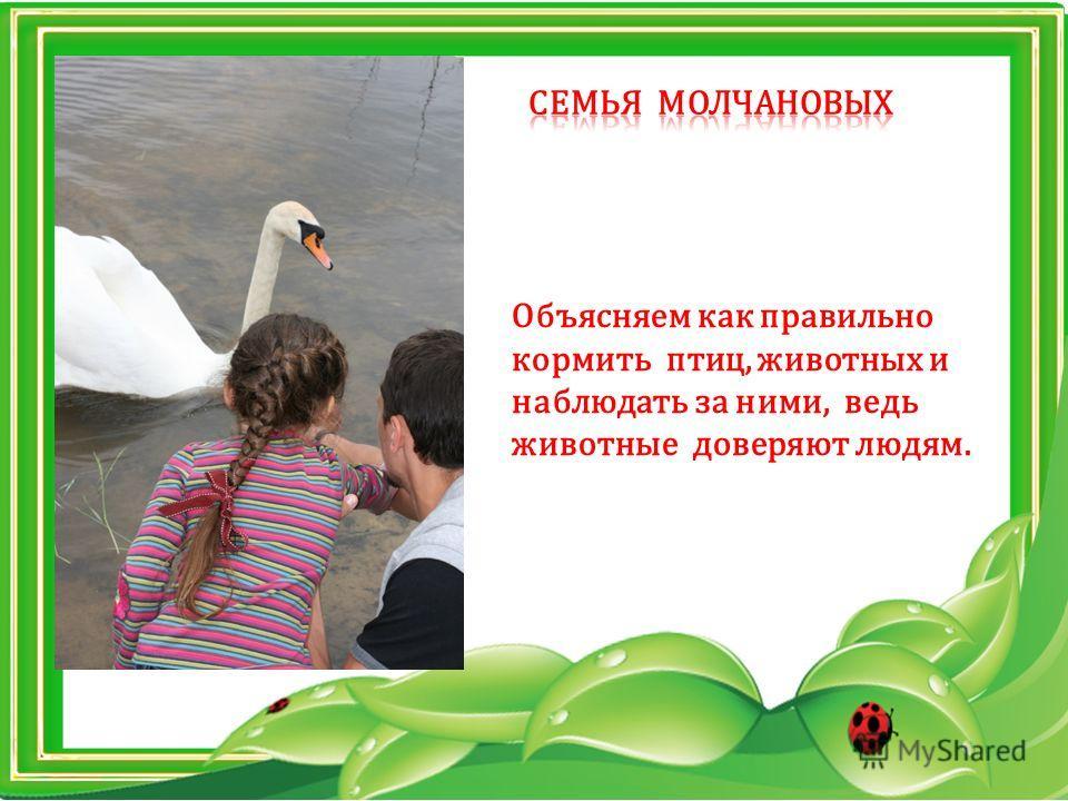 Объясняем как правильно кормить птиц, животных и наблюдать за ними, ведь животные доверяют людям.