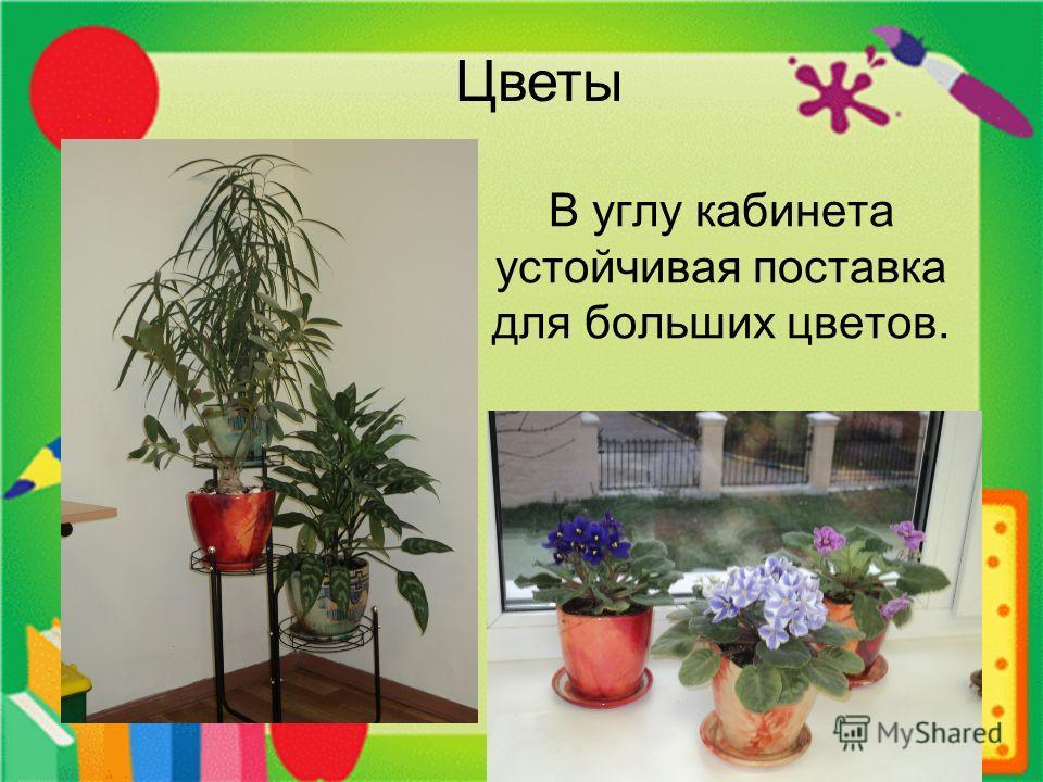 В углу кабинета устойчивая поставка для больших цветов. Цветы
