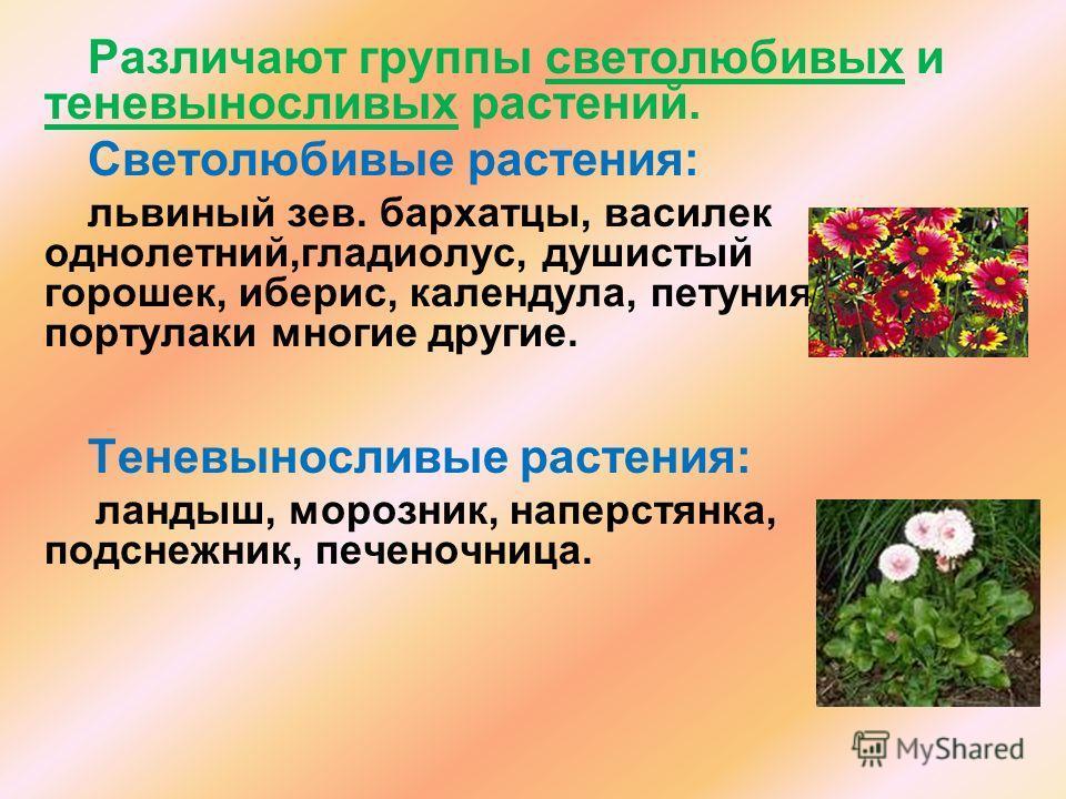 Различают группы светолюбивых и теневыносливых растений. Светолюбивые растения: львиный зев. бархатцы, василек однолетний,гладиолус, душистый горошек, иберис, календула, петуния, портулаки многие другие. Теневыносливые растения: ландыш, морозник, нап