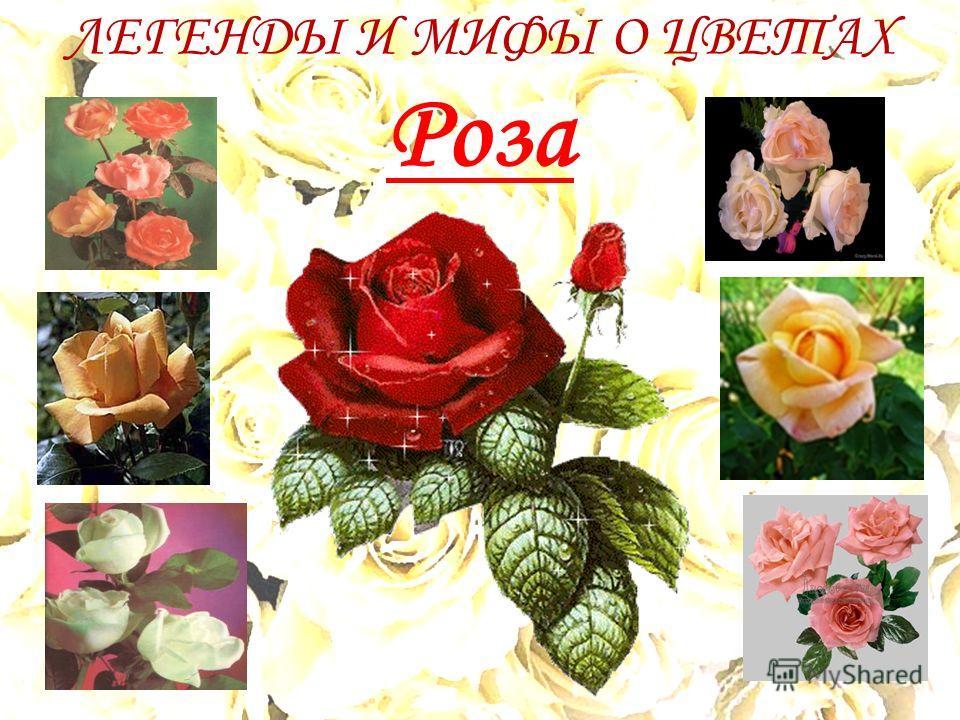 ЛЕГЕНДЫ И МИФЫ О ЦВЕТАХ Роза