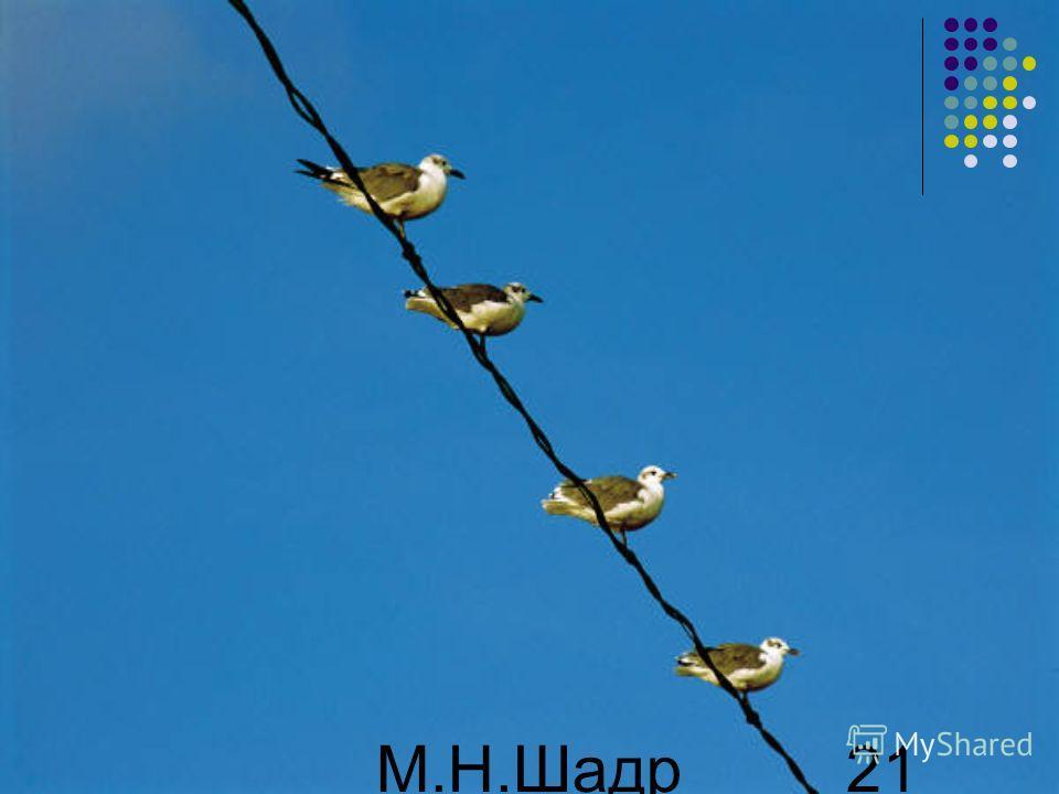 М.Н.Шадр ина 21