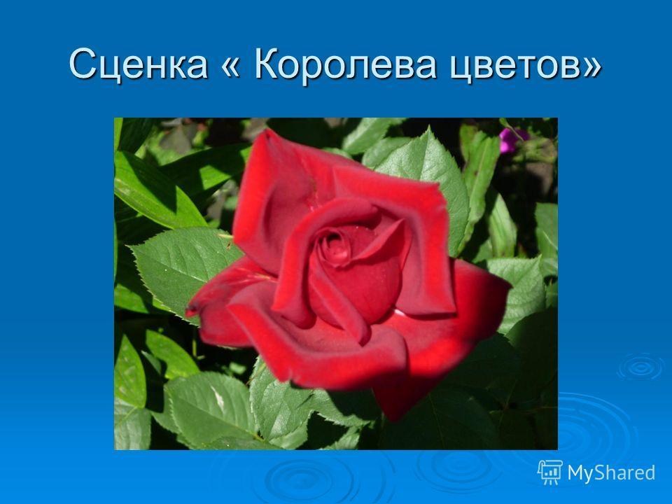 «Песня о волшебном цветке»