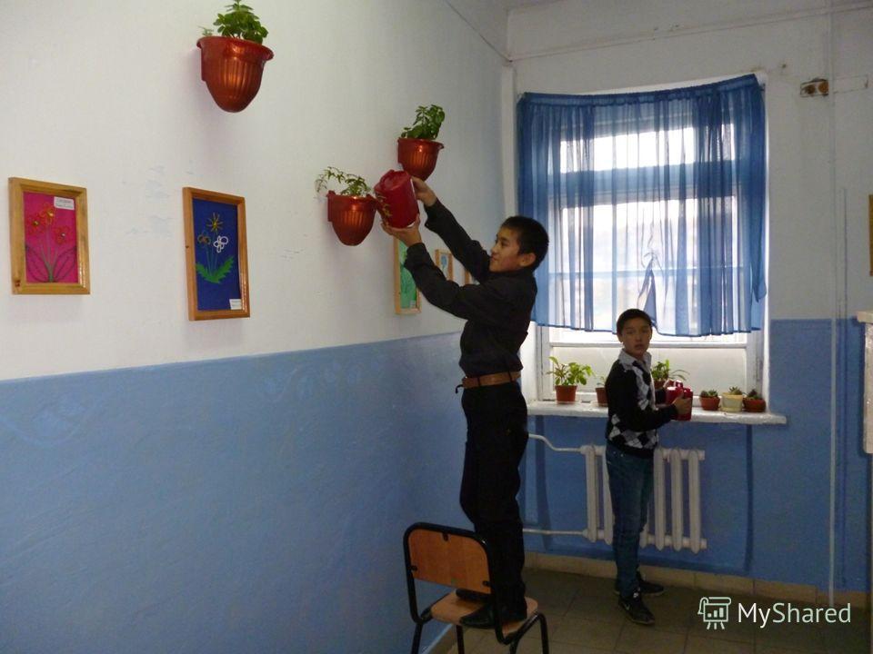Так мы ухаживаем за школьными растениями.