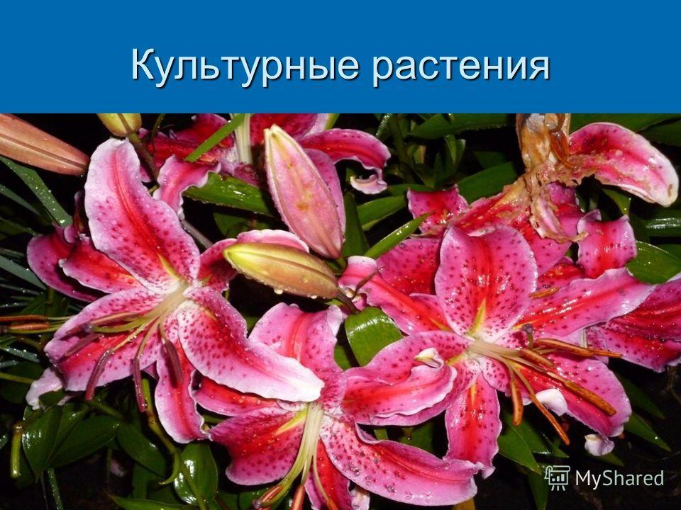Песня «Полевые цветы»