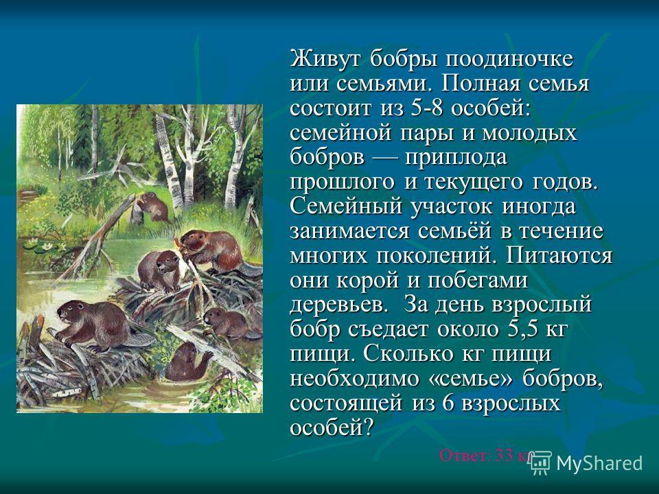 Живут бобры поодиночке или семьями. Полная семья состоит из 5-8 особей: семейной пары и молодых бобров приплода прошлого и текущего годов. Семейный участок иногда занимается семьёй в течение многих поколений. Питаются они корой и побегами деревьев. З