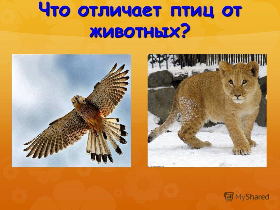 Что отличает птиц от животных?