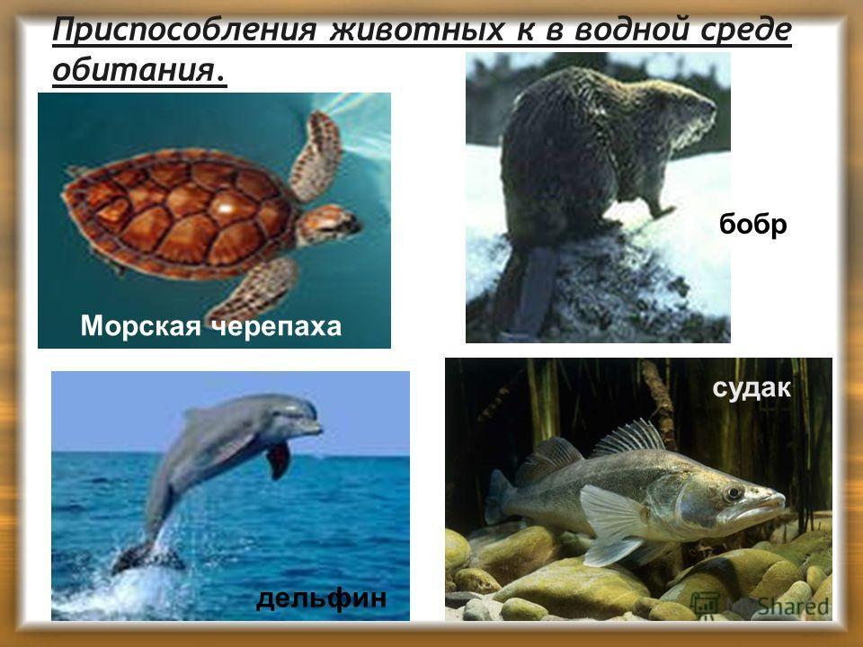 Приспособления животных к в водной среде обитания. Морская черепаха дельфин бобр судак