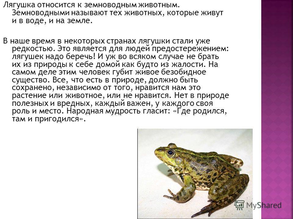 Лягушка относится к земноводным животным. Земноводными называют тех животных, которые живут и в воде, и на земле. В наше время в некоторых странах лягушки стали уже редкостью. Это является для людей предостережением: лягушек надо беречь! И уж во всяк