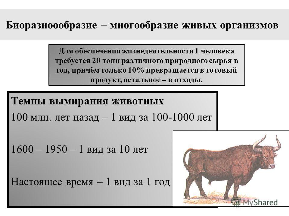 Биоразноообразие – многообразие живых организмов Темпы вымирания животных 100 млн. лет назад – 1 вид за 100-1000 лет 1600 – 1950 – 1 вид за 10 лет Настоящее время – 1 вид за 1 год Для обеспечения жизнедеятельности 1 человека требуется 20 тонн различн
