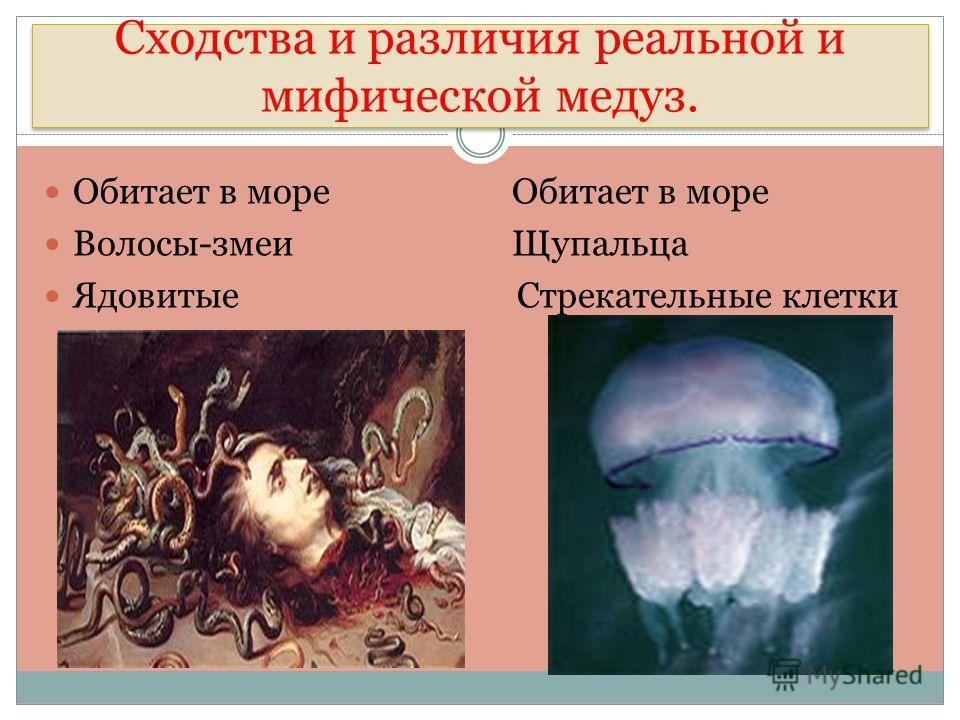 Сходства и различия реальной и мифической медуз. Обитает в море Обитает в море Волосы-змеи Щупальца Ядовитые Стрекательные клетки