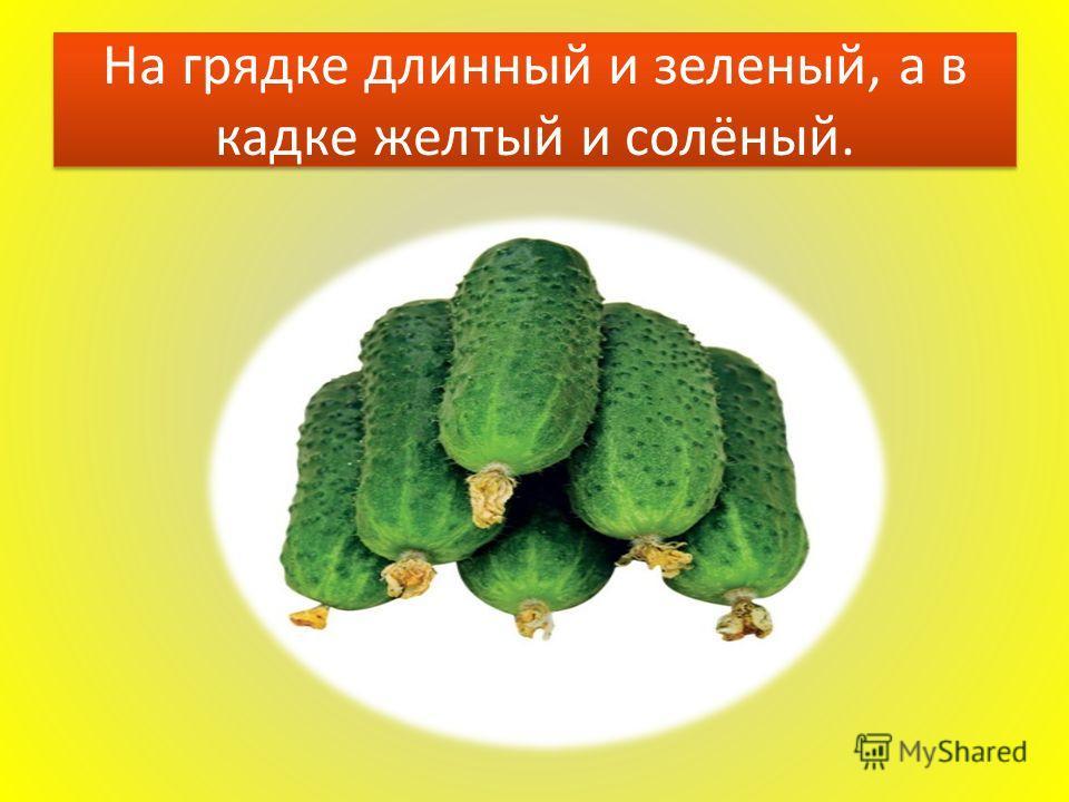 На грядке длинный и зеленый, а в кадке желтый и солёный.