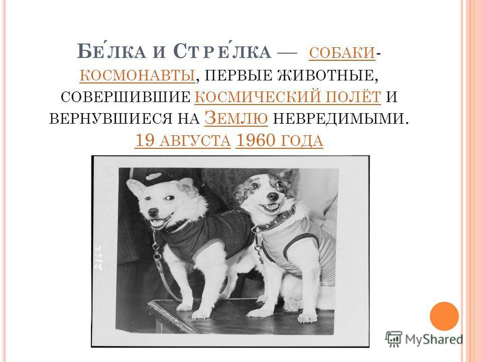Б ЕЛКА И С ТРЕЛКА СОБАКИ - КОСМОНАВТЫ, ПЕРВЫЕ ЖИВОТНЫЕ, СОВЕРШИВШИЕ КОСМИЧЕСКИЙ ПОЛЁТ И ВЕРНУВШИЕСЯ НА З ЕМЛЮ НЕВРЕДИМЫМИ. 19 АВГУСТА 1960 ГОДА СОБАКИ КОСМОНАВТЫ КОСМИЧЕСКИЙ ПОЛЁТЗ ЕМЛЮ 19 АВГУСТА1960 ГОДА