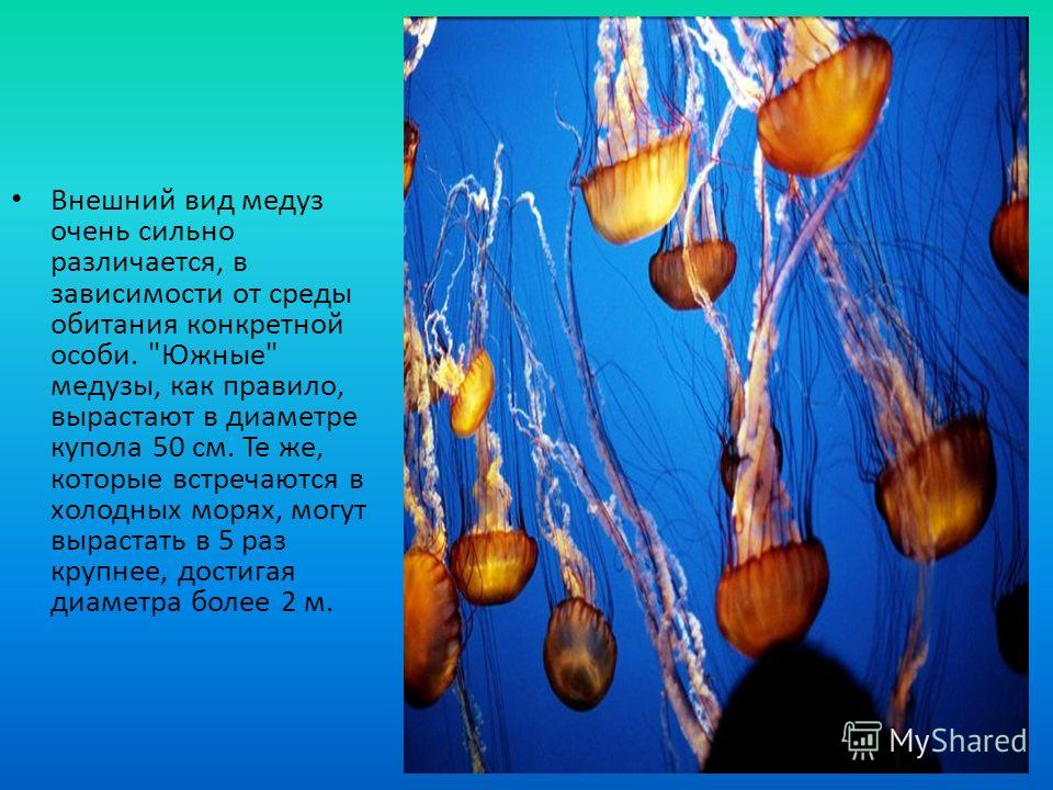 Внешний вид медуз очень сильно различается, в зависимости от среды обитания конкретной особи.