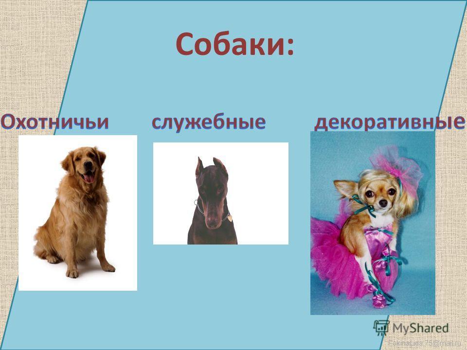 FokinaLida.75@mail.ru Собаки: