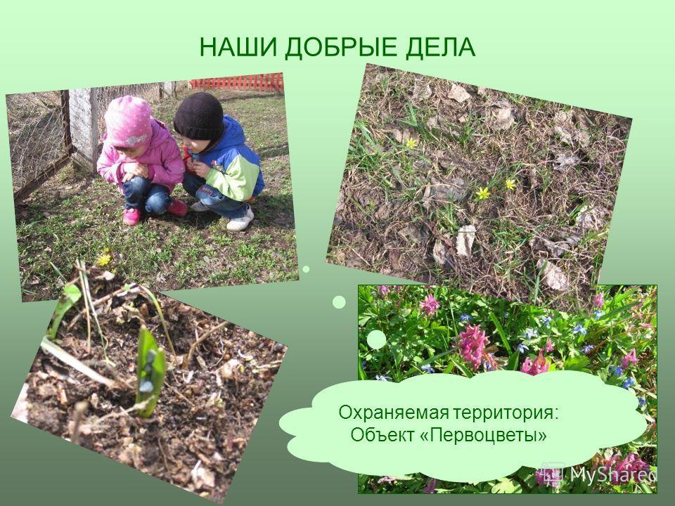 В ЦВЕТНИКЕ НА ОГОРОДЕ У ВЕЧНОЗЕЛЕНЫХ У вечнозеленых На огороде В цветнике На прогулке