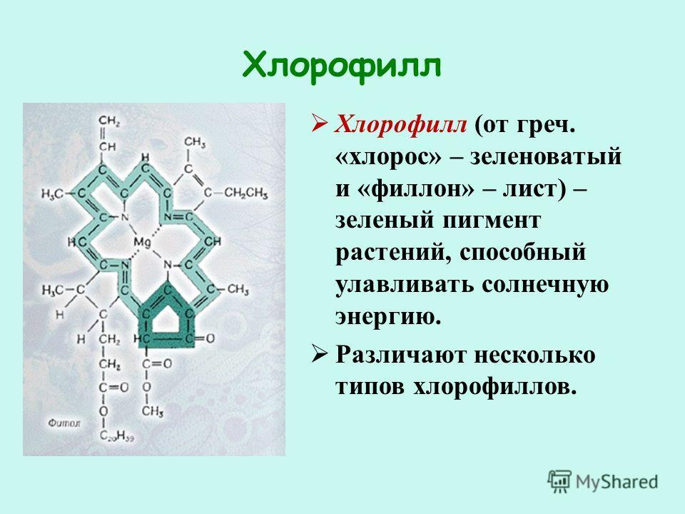 Определение хлорофилла в растениях