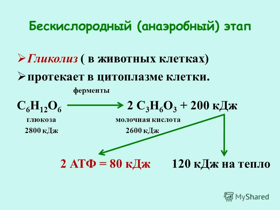 Бескислородный (анаэробный) этап Гликолиз ( в животных клетках) протекает в цитоплазме клетки. ферменты С 6 Н 12 О 6 2 С 3 Н 6 О 3 + 200 кДж глюкоза молочная кислота 2800 кДж 2600 кДж 2 АТФ = 80 кДж 120 кДж на тепло