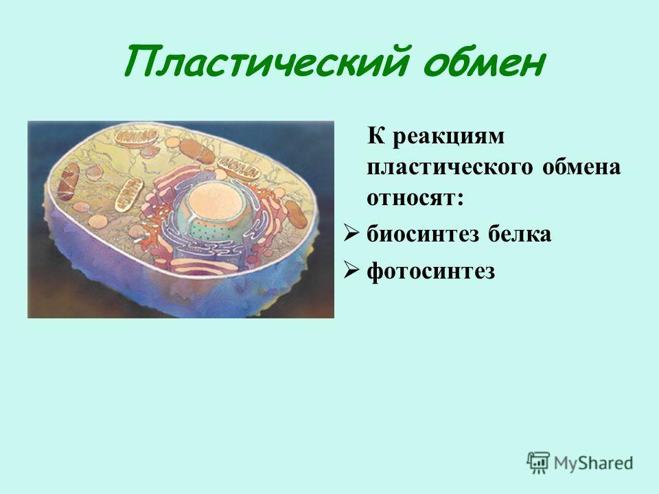 Пластический обмен К реакциям пластического обмена относят: биосинтез белка фотосинтез