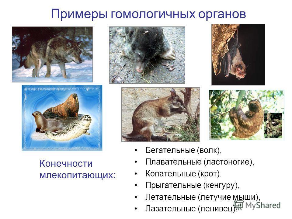 Бегательные (волк), Плавательные (ластоногие), Копательные (крот). Прыгательные (кенгуру), Летательные (летучие мыши), Лазательные (ленивец). Конечности млекопитающих: