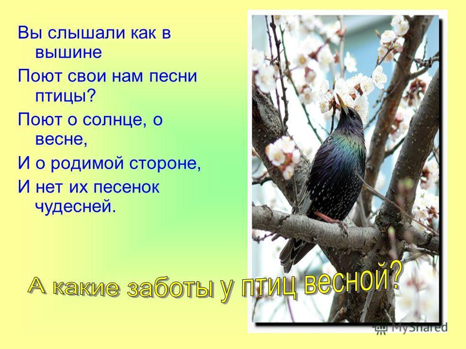 Вы слышали как в вышине Поют свои нам песни птицы? Поют о солнце, о весне, И о родимой стороне, И нет их песенок чудесней.