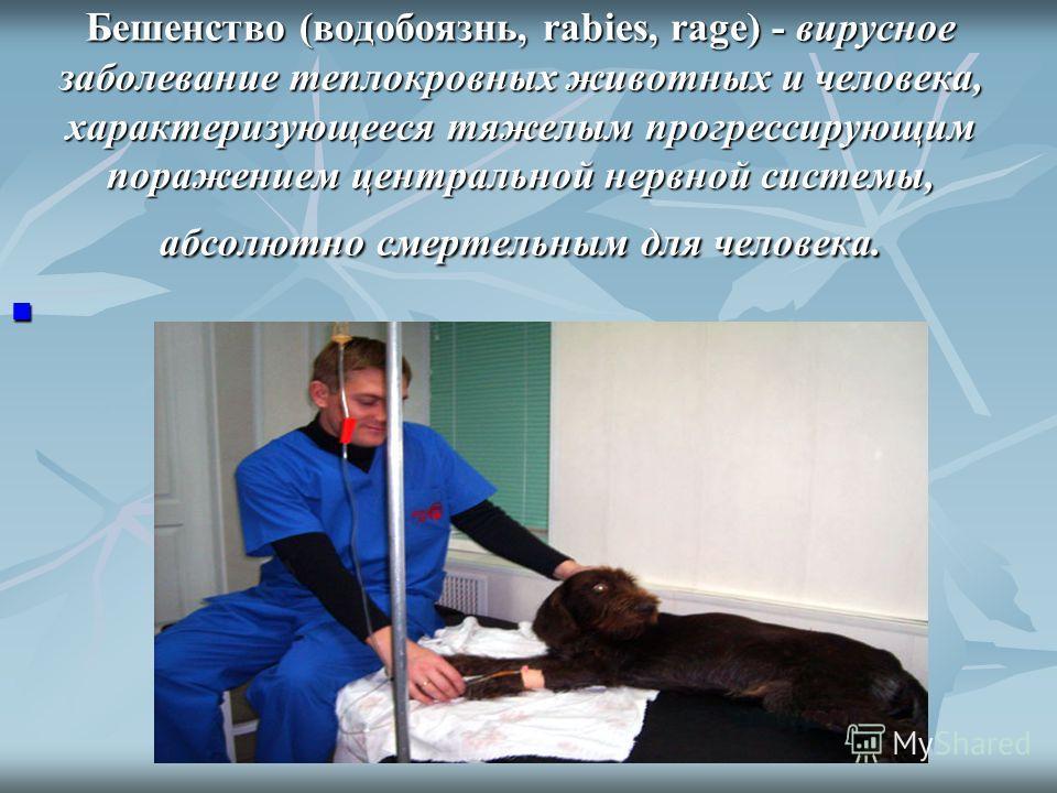 Бешенство (водобоязнь, rabies, rage) - вирусное заболевание теплокровных животных и человека, характеризующееся тяжелым прогрессирующим поражением центральной нервной системы, абсолютно смертельным для человека.