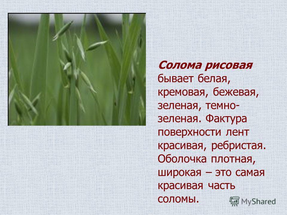 Солома рисовая бывает белая, кремовая, бежевая, зеленая, темно- зеленая. Фактура поверхности лент красивая, ребристая. Оболочка плотная, широкая – это самая красивая часть соломы.