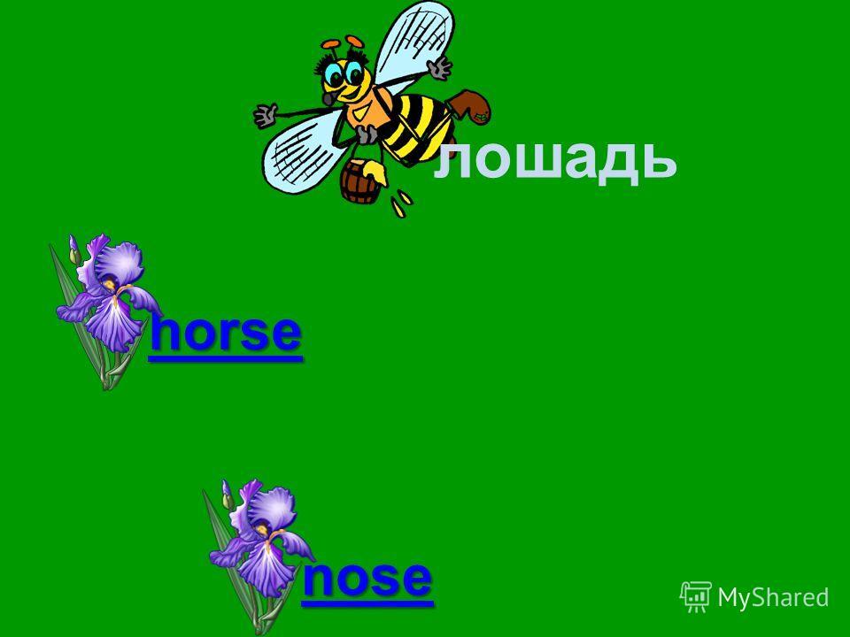 лошадь horse bird nose