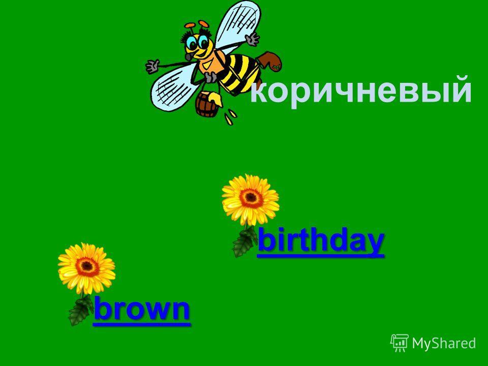 коричневый bear brown birthday