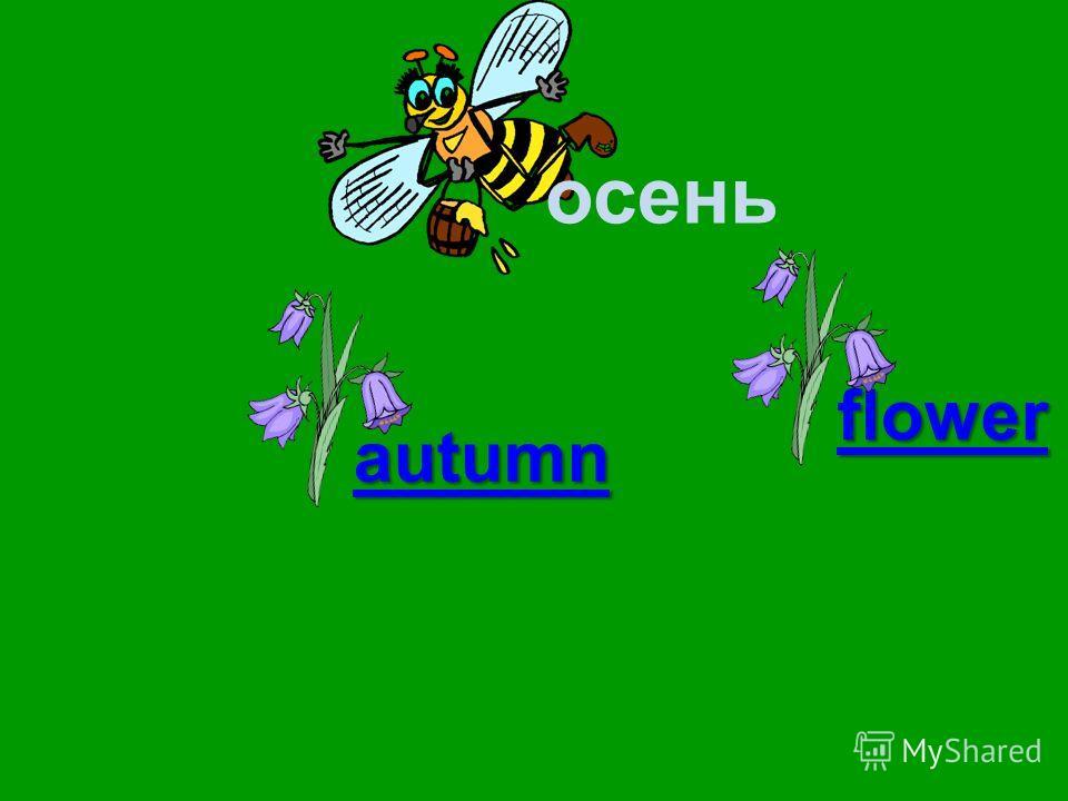 осень autumn season flower