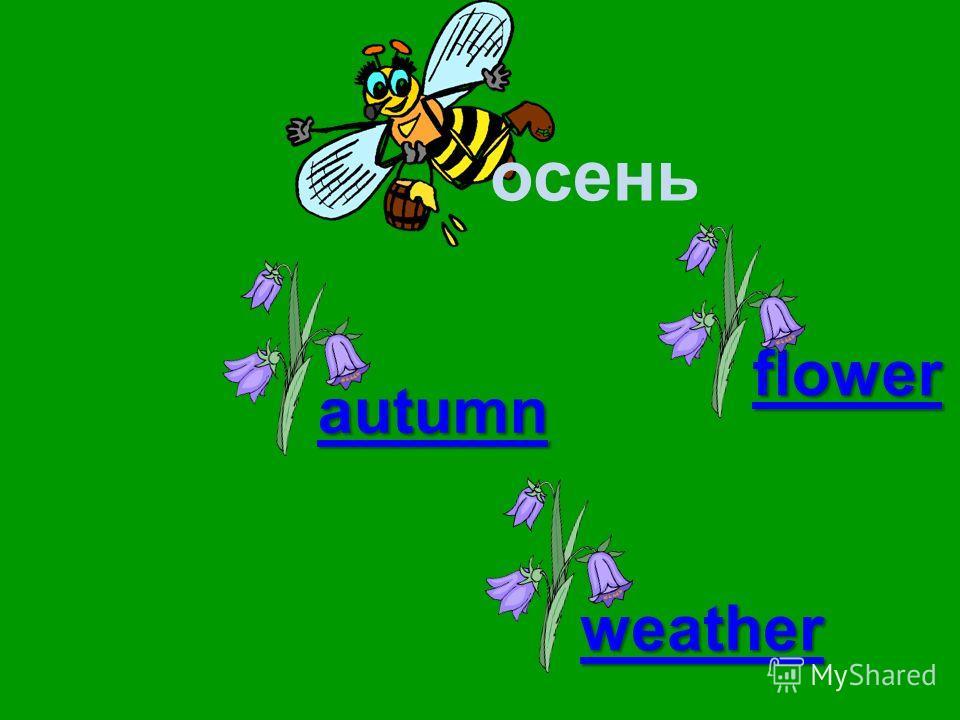 осень autumn weather