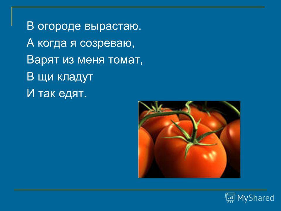 В огороде вырастаю. А когда я созреваю, Варят из меня томат, В щи кладут И так едят.
