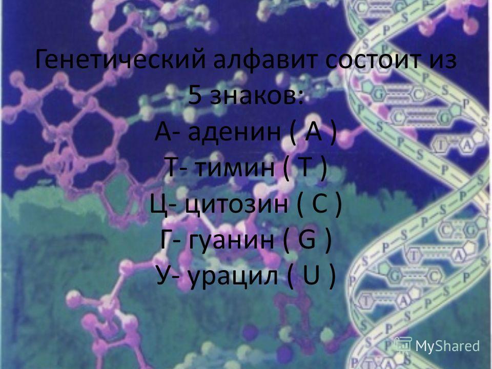 Генетический алфавит состоит из 5 знаков: А- аденин ( А ) Т- тимин ( Т ) Ц- цитозин ( С ) Г- гуанин ( G ) У- урацил ( U )