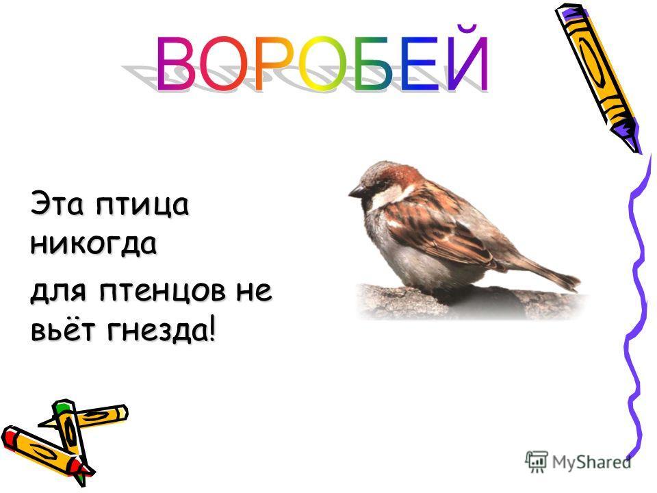 В нашей местности встречаются очень многие птицы. Птицы бывают перелетные и оседлые. Перелетные: ласточка, грач, жаворонки. Оседлые: воробьи. воробейворобей
