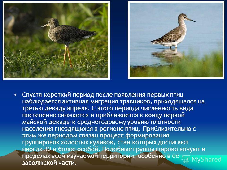 Спустя короткий период после появления первых птиц наблюдается активная миграция травников, приходящаяся на третью декаду апреля. С этого периода численность вида постепенно снижается и приближается к концу первой майской декады к среднегодовому уров
