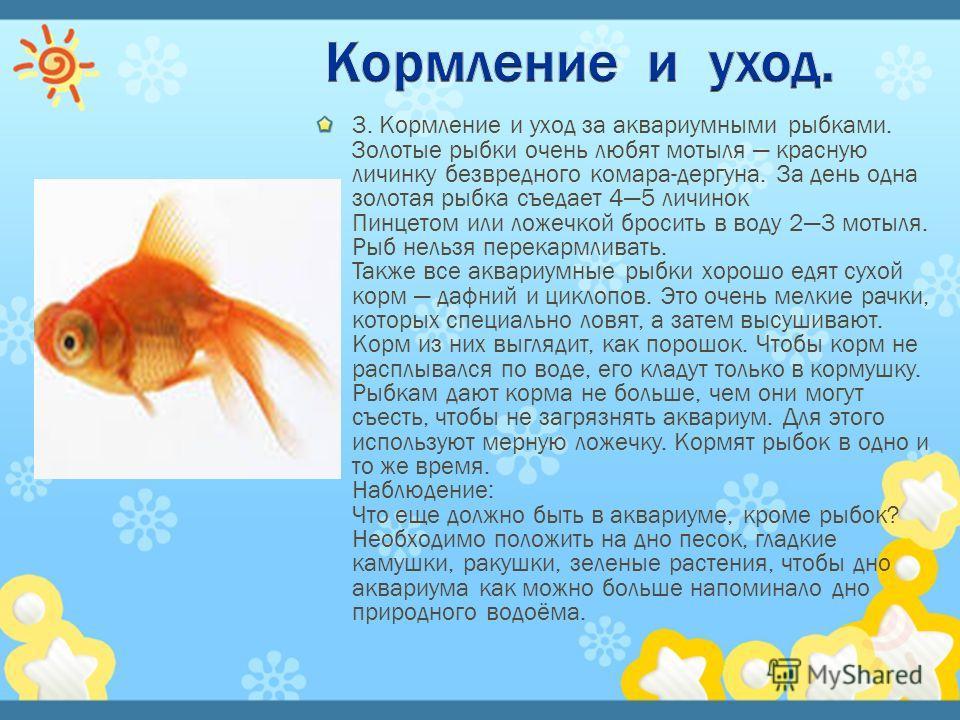 Тело у рыб обтекаемое, сжато с боков, заострено спереди и сужено сзади. Такая форма тела позволяет рыбкам хорошо плавать. На конце тела у золото рыбки, как и у всех других рыб, имеется хвостовой плавник. Кроме того, плавники у рыбки есть на спинке, н