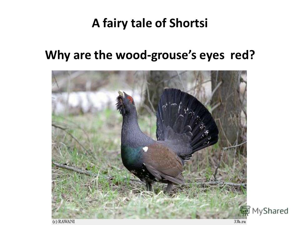 A fairy tale of Shortsi Why are the wood-grouses eyes red?