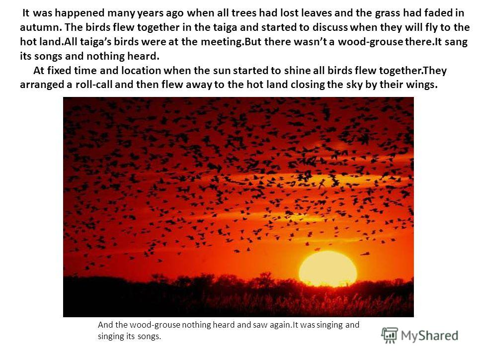 It was happened many years ago when all trees had lost leaves and the grass had faded in autumn. The birds flew together in the taiga and started to discuss when they will fly to the hot land.All taigas birds were at the meeting.But there wasnt a woo