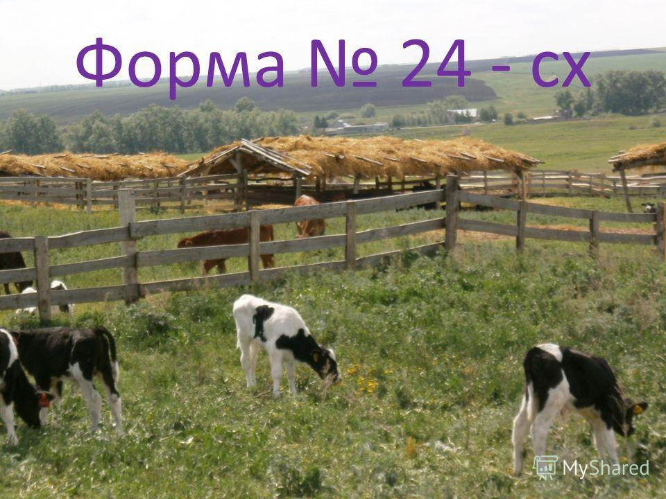 Форма 24 - сх